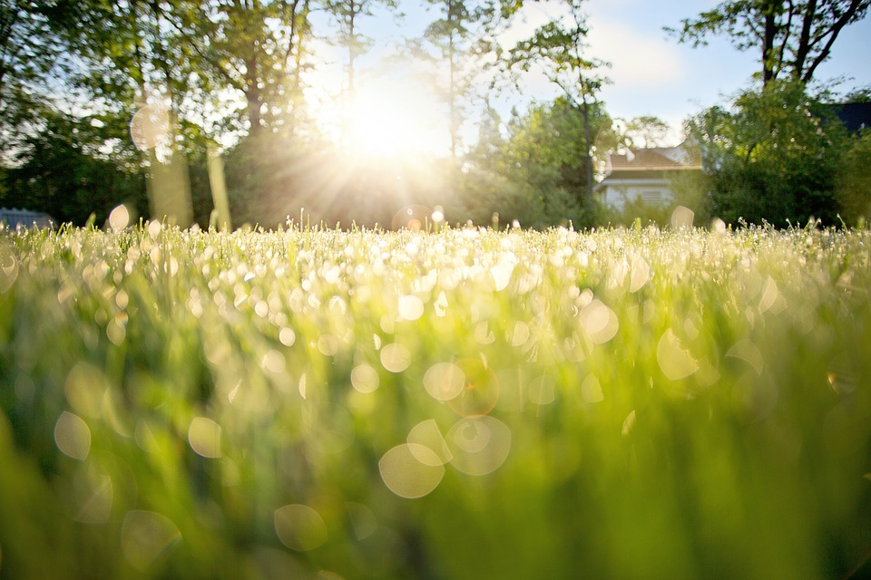 dew-on-grass-788059_960_720