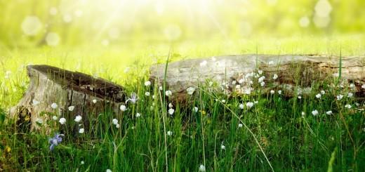 flowers-164754_960_720